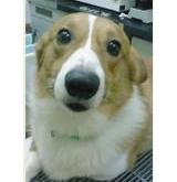 獣医師Dr.しろくまのブログへ